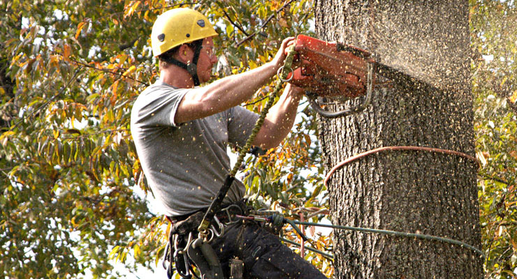 Things You Need To Do Before Starting a Tree Removal Service